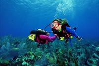 Marmaris ya da ��meler ��k��l� 1 Ki�ilik Diving Dal�� Turu 59 TL