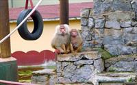 Dar�ca Emsa Palace Hotel'de Leziz Izgara Men� + Dar�ca Faruk Yal��n Hayvanat Bah�esine Giri� 95 TL yerine Sadece 65 TL!