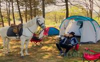 Atlıtur Gümüşdere Binicilik Kampında Çadırını Al Doğaya Gel Fırsatı 60 TL yerine 30 TL