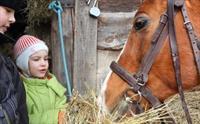 Sarıyer Atlıtur'da Okullara Yönelik At Binme Etkinliği 70 TL yerine 25 TL
